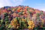 Explosion of Colors, Woodland, Forest, Trees, Hill, autumn, deciduous, NORV01P02_05