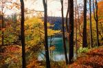 Woodland, Forest, Trees, Hill, Lake, autumn, water, deciduous, Equanimity, NORV01P02_12.1260
