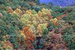 Mountain, Woodland, Forest, Trees, Hill, autumn, deciduous, NORV01P03_18