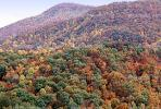 Mountain, Woodland, Forest, Trees, Hill, autumn, deciduous, NORV01P04_10
