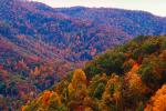 Mountain, Woodland, Forest, Trees, Hills, Valley, autumn, deciduous, Equanimity, NORV01P04_11.1260