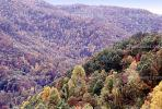 Mountain, Woodland, Forest, Trees, Hills, Valley, autumn, deciduous, NORV01P04_11
