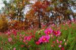 Field of Flowers, Daisies, Woodland, Forest, Trees, Flowers, autumn, deciduous, NORV01P05_02.1260