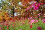 Field of Flowers, Daisies, Woodland, Forest, Trees, Flowers, autumn, deciduous, NORV01P05_09.1260