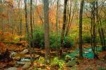 Woodland, Forest, Trees, Hills, River, rocks, deciduous, stream, autumn, NORV01P06_13.1260