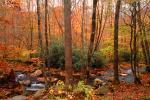 Woodland, Forest, Trees, Hills, River, rocks, deciduous, stream, autumn, NORV01P06_15.1260