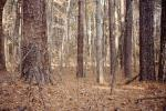 dry woodlands, Forest, trees, deciduous, NORV01P07_14