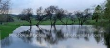 Bare Trees, Reflection, Pond, Lake, Novato, Marin County, water