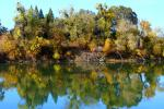 fall colors, autumn, water, trees, reflection, Sacramento River, NPND05_060