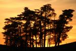 Sunset, trees, clouds, NPND05_088