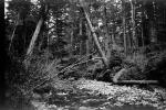 creek, stream, rocks, forest, NPNPCD0654_079