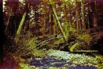 creek, stream, rocks, forest, NPNPCD0654_079B