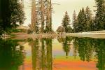 Bull Frog Pond, water, wet, liquid, lake, NPNPCD0656_072B