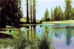 Bull Frog Pond, water, wet, liquid, lake, NPNPCD0656_075B