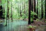 Emerald Pools, ponds, water, Forest, NPNV01P08_15