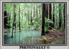 Emerald Pools, ponds, water, Forest, NPNV01P08_15B