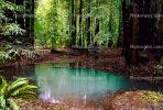 Emerald Pools, ponds, water, Forest, NPNV01P08_19.0912