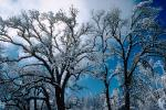 snow covered trees, Ice, Cold, Chill, Chilled, Chilly, Cool, Frosty, Frozen, Icy, Snowy, Winter, Wintry, NPNV03P03_07.1266