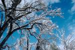 snow covered trees, Ice, Cold, Chill, Chilled, Chilly, Cool, Frosty, Frozen, Icy, Snowy, Winter, Wintry, NPNV03P03_08.1266
