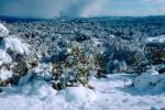 snow covered trees, Ice, Cold, Chill, Chilled, Chilly, Cool, Frosty, Frozen, Icy, Snowy, Winter, Wintry, NPNV03P03_13.1266