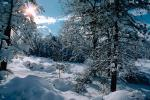 snow covered trees, Ice, Cold, Chill, Chilled, Chilly, Cool, Frosty, Frozen, Icy, Snowy, Winter, Wintry, NPNV03P03_19.1266