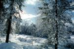 snow covered trees, Ice, Cold, Chill, Chilled, Chilly, Cool, Frosty, Frozen, Icy, Snowy, Winter, Wintry, NPNV03P04_01