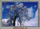 snow covered trees, Ice, Cold, Chill, Chilled, Chilly, Cool, Frosty, Frozen, Icy, Snowy, Winter, Wintry, NPNV03P04_02