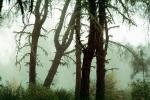 Fog, Foggy, Trees, Lake Pillsbury, Mendocino National Forest, Mendocino County, water, NPNV08P07_07