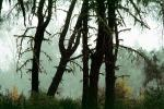 Fog, Foggy, Trees, Lake Pillsbury, Mendocino National Forest, Mendocino County, water, NPNV08P07_08