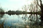 Lake, Bare Trees, Water, Reflection, calm, stillness, NPNV09P06_10