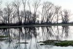 Lake, Bare Trees, Water, Reflection, calm, stillness, NPNV09P06_13