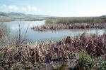 Wetlands, reeds, brackish water, Limantour Beach, NPNV11P06_08