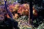 Tree, deciduous forest, autumn, fall colors, NPNV16P01_14