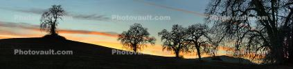 Paso Robles, Vineyard Road, bare tree
