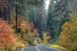 S-Curve, Road, Roadway, Forest, Trees, Fall Colors, Autumn, NPSD01_294