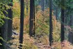 Forest, Trees, Fall Colors, Autumn, NPSD01_295