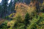 Forest, Trees, Fall Colors, Autumn, NPSD01_297