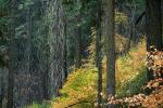 Forest, Trees, Fall Colors, Autumn, NPSD01_298