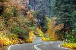 S-Curve, Road, Roadway, Forest, Trees, Fall Colors, Autumn, NPSD02_005