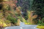 S-Curve, Road, Roadway, Forest, Trees, Fall Colors, Autumn, NPSD02_006