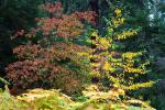 Forest, Trees, Fall Colors, Autumn, NPSD02_008