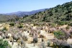 Joshua Tree National Monument, Arid, Drought, Dry, Dessicated, Parched, NPSV03P12_09