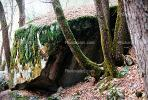 Trees, Moss, Boulders, lichen, NPYV01P06_04.2569
