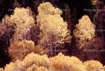 fall colors, Autumn, Deciduous Trees, Forest, Woodland, Vegetation, Flora, Plants, Colorful, Beautiful, Magical, Woods, NSNV01P11_02