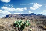 Beavertail Cactus, NTXV01P03_13