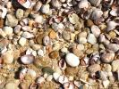 Shells, Beach, Rocks, Pebbles, Orient Point, Long Island, New York, NWED01_137