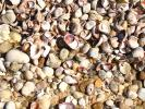 Shells, Beach, Rocks, Pebbles, Orient Point, Long Island, New York, NWED01_138