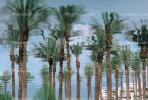 Palm Trees, Palm Springs, California, Water Reflection, Wet, Liquid, Water, NWEV05P04_12.3737