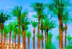 Palm Trees, Palm Springs, California, Water Reflection, Wet, Liquid, Water, NWEV05P04_12B.3737