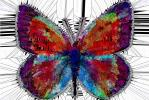 Crystalized Colors of a Butterfly with Spiky Protrusions